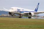 makochinさんが、高知空港で撮影した全日空 787-8 Dreamlinerの航空フォト(写真)