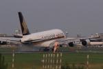 多楽さんが、成田国際空港で撮影したシンガポール航空 A380-841の航空フォト(写真)