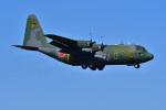 はるかのパパさんが、厚木飛行場で撮影した航空自衛隊 C-130H Herculesの航空フォト(写真)
