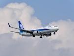 バーダーさんさんが、新千歳空港で撮影した全日空 737-881の航空フォト(写真)