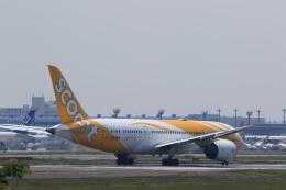 多楽さんが、成田国際空港で撮影したスクート 787-8 Dreamlinerの航空フォト(写真)