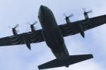 ペア ドゥさんが、千歳基地で撮影した航空自衛隊 C-130H Herculesの航空フォト(写真)