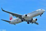 吉田高士さんが、羽田空港で撮影した日本航空 737-846の航空フォト(写真)