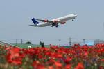蒲田賢二さんが、成田国際空港で撮影したスカンジナビア航空 A340-313Xの航空フォト(写真)