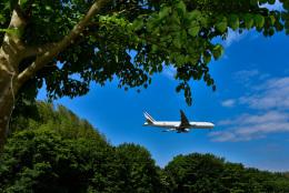 パンダさんが、成田国際空港で撮影したエールフランス航空 777-328/ERの航空フォト(写真)