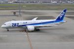キイロイトリ1005fさんが、羽田空港で撮影した全日空 787-8 Dreamlinerの航空フォト(写真)
