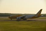 シャークレットさんが、新千歳空港で撮影したスクート 787-8 Dreamlinerの航空フォト(写真)