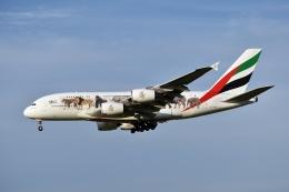 sonnyさんが、成田国際空港で撮影したエミレーツ航空 A380-861の航空フォト(写真)