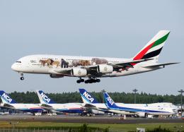 goldengoldsさんが、成田国際空港で撮影したエミレーツ航空 A380-861の航空フォト(写真)