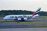 ちかぼーさんが、成田国際空港で撮影したエミレーツ航空 A380-861の航空フォト(写真)
