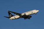 みつるさんが、羽田空港で撮影した全日空 737-881の航空フォト(写真)