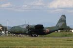 カンクンさんが、名古屋飛行場で撮影した航空自衛隊 C-130H Herculesの航空フォト(写真)