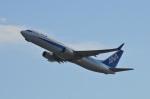 amagoさんが、関西国際空港で撮影した全日空 737-881の航空フォト(写真)