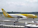 maverickさんが、成田国際空港で撮影したスクート 787-8 Dreamlinerの航空フォト(写真)