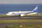 けいとパパさんが、羽田空港で撮影した全日空 787-8 Dreamlinerの航空フォト(写真)