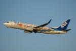しんさんが、新千歳空港で撮影した全日空 737-881の航空フォト(写真)