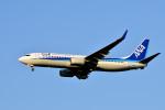 HS888さんが、鹿児島空港で撮影した全日空 737-881の航空フォト(写真)