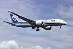 yoshibouさんが、成田国際空港で撮影した全日空 787-8 Dreamlinerの航空フォト(写真)