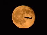 竜747さんが、羽田空港で撮影した不明の航空フォト(写真)