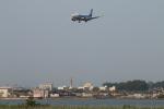 カンタさんが、新潟空港で撮影したANAウイングス 737-5L9の航空フォト(写真)