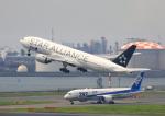 タミーさんが、羽田空港で撮影した全日空 777-281の航空フォト(写真)