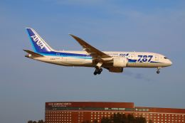 zero1さんが、成田国際空港で撮影した全日空 787-8 Dreamlinerの航空フォト(写真)