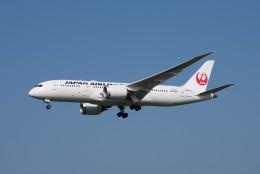 ポン太さんが、成田国際空港で撮影した日本航空 787-8 Dreamlinerの航空フォト(写真)