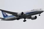 ドラパチさんが、羽田空港で撮影した全日空 787-8 Dreamlinerの航空フォト(写真)