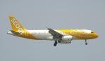 Seiiさんが、シンガポール・チャンギ国際空港で撮影したスクート・タイガーエア A320-232の航空フォト(写真)