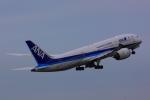 にょとろさんが、羽田空港で撮影した全日空 787-8 Dreamlinerの航空フォト(写真)