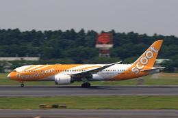 こだしさんが、成田国際空港で撮影したスクート 787-8 Dreamlinerの航空フォト(写真)
