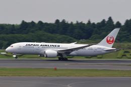 こだしさんが、成田国際空港で撮影した日本航空 787-8 Dreamlinerの航空フォト(写真)