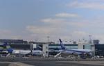 Take51さんが、フランクフルト国際空港で撮影した全日空 777-381/ERの航空フォト(写真)