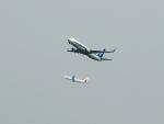 なまくら はげるさんが、羽田空港で撮影した全日空 737-881の航空フォト(写真)