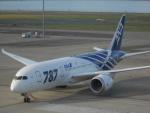 パピヨンさんが、羽田空港で撮影した全日空 787-8 Dreamlinerの航空フォト(写真)