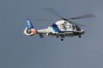 GNPさんが、鹿児島空港で撮影したオールニッポンヘリコプター AS365N2 Dauphin 2の航空フォト(写真)