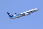 気分屋さんが、羽田空港で撮影した全日空 737-881の航空フォト(写真)