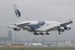 airdrugさんが、成田国際空港で撮影したマレーシア航空 A380-841の航空フォト(写真)