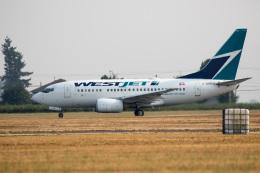 チャッピー・シミズさんが、アボッツフォード国際空港で撮影したウェストジェット 737-6CTの航空フォト(写真)
