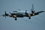 skyclearさんが、厚木飛行場で撮影した海上自衛隊 P-3Cの航空フォト(写真)
