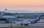 Take51さんが、関西国際空港で撮影した香港エクスプレス A320-271Nの航空フォト(写真)