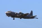 Nambu201さんが、ダニエル・K・イノウエ国際空港で撮影したアメリカ海軍 P-3C-IIの航空フォト(写真)