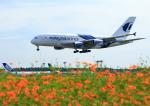 タミーさんが、成田国際空港で撮影したマレーシア航空 A380-841の航空フォト(写真)
