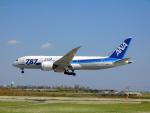 ken1992さんが、宮古空港で撮影した全日空 787-8 Dreamlinerの航空フォト(写真)