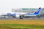 KIMISTONERさんが、台湾桃園国際空港で撮影した全日空 787-8 Dreamlinerの航空フォト(写真)