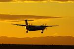 ポンタさんが、新潟空港で撮影したANAウイングス DHC-8-402Q Dash 8の航空フォト(写真)