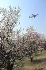 まさとしさんが、伊丹空港で撮影した全日空 A320-211の航空フォト(写真)