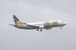 マサさんが、羽田空港で撮影したスカイネットアジア航空 737-4M0の航空フォト(写真)
