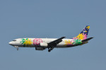だいせんさんが、羽田空港で撮影したソラシド エア 737-4M0の航空フォト(写真)