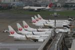 肉食獣さんが、羽田空港で撮影したJALエクスプレス 737-846の航空フォト(写真)